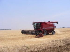 Harvest, Chanyanya Pilot